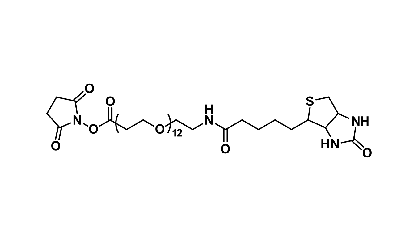 NHS-dPEG®₁₂-biotin