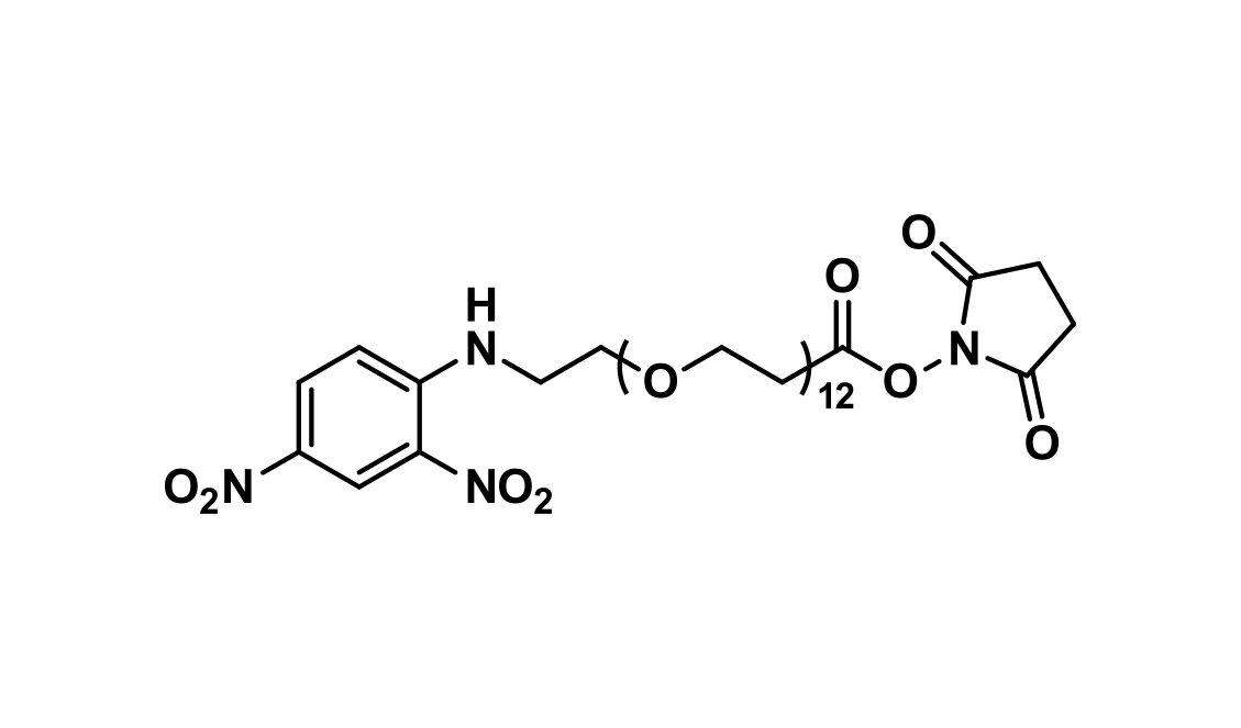 DNP-dPEG®₁₂-NHS ester