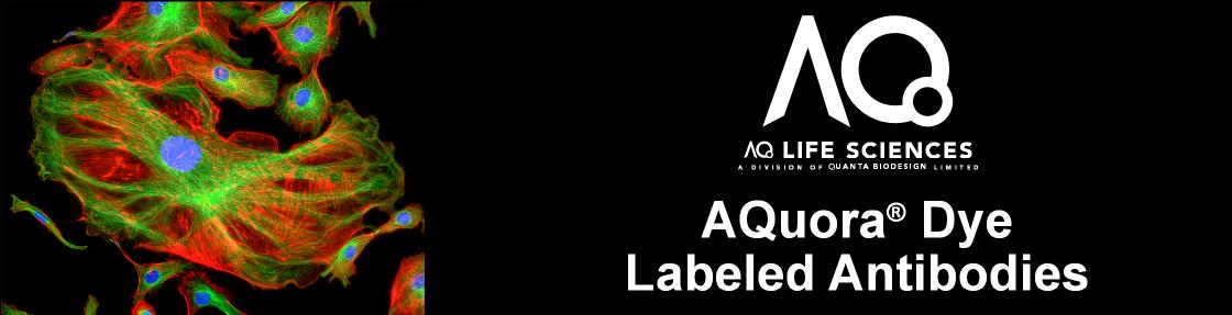 AQuora Dye Antibodies Header