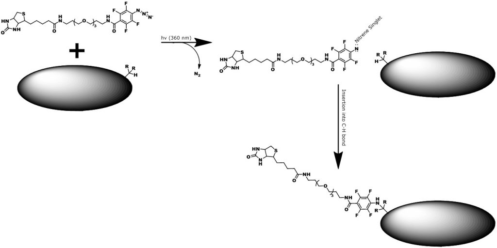 Product number 10308, Biotin-dPEG®3-tetrafluorophenyl azide, is a unique photoaffinity biotin labeling reagent made and sold by Quanta BioDesign, Ltd. Upon activation with 360 nm light, the activated tetrafluorophenyl azide inserts randomly into C-H bonds. This graphic show the general scheme for photolabeling surfaces with C-H bonds using this product.
