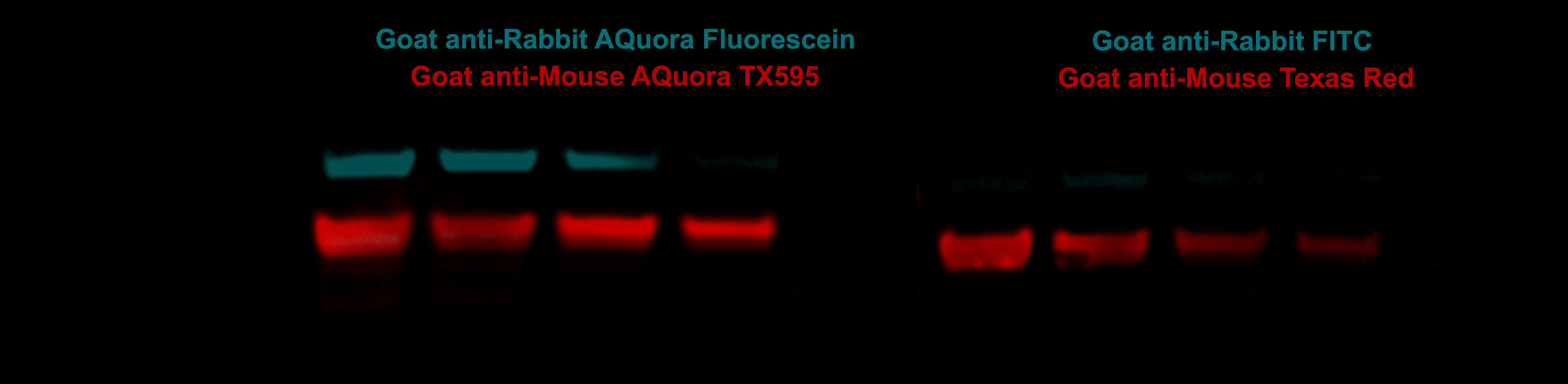 FLUORO_07152021_120718AQFL_AQ595_GOOD PS 3 IS PNG4 (002)