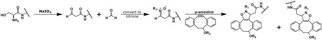 Figure 11: This image shows bioconjugation using the SPANC click chemistry reaction through an N-terminal serine. This image is adapted from reference 57. In the paper by Ning et al., R1 is a methyl group; however, other substitutions on the nitrone are possible. Also, while Ning et al. used DIBO for the conjugation, other cyclooctyne derivatives have been used successfully in SPANC reactions.