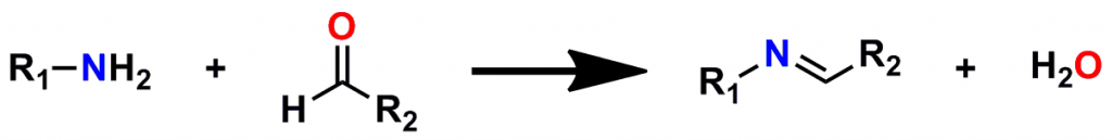 Figure 2: Formation of an Imine (Schiff Base)