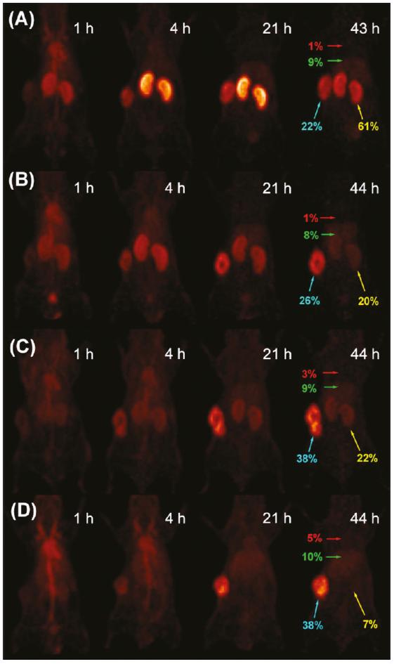 Tumor Imaging using PET with 64Cu-labeled DOTA-NH-PEGn-AVP04-50