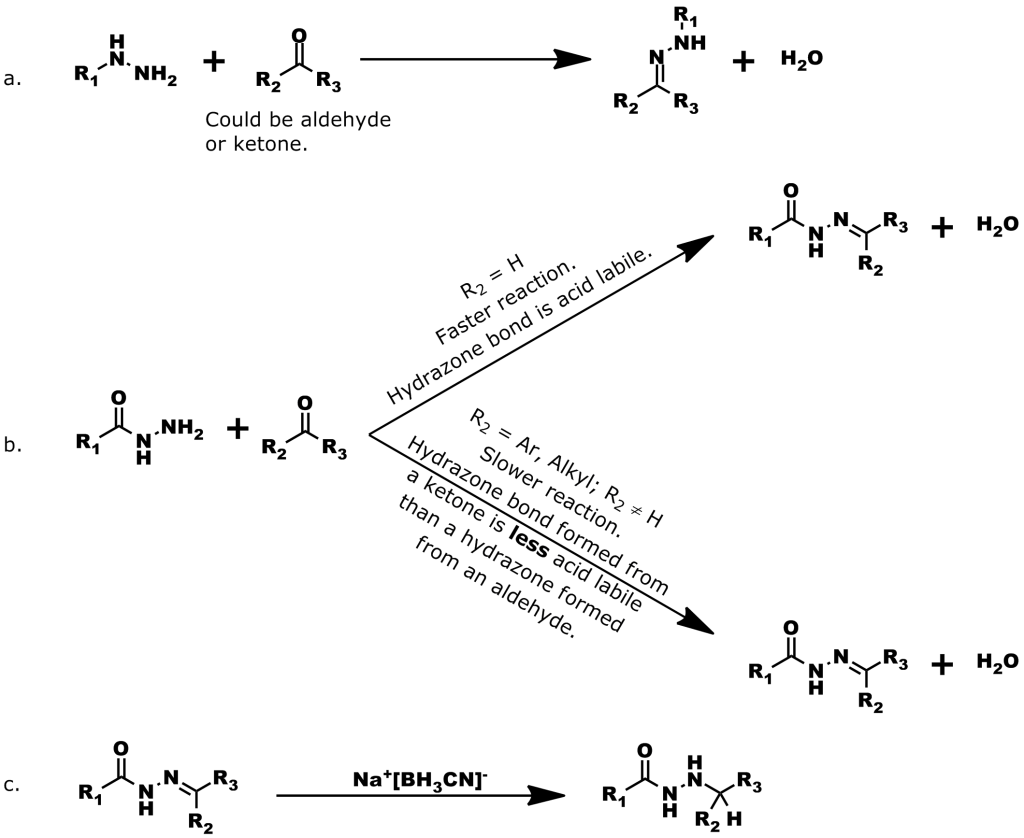 Figure 3: Formation of Hydrazone Bonds. a. General reaction scheme for the formation of a hydrazone bond from an aldehyde or ketone. b. A hydrazone bond formed from a hydrazine or hydrazide and an aldehyde has a fast reaction rate and has a higher degree of acid lability than a hydrazone bond formed from reaction with a ketone. c. To improve the stability of hydrazone bonds, sodium cyanoborohydride (Na+[BH3CN]-) can be used to reduce the Schiff base to a much more hydrolytically stable secondary amine.