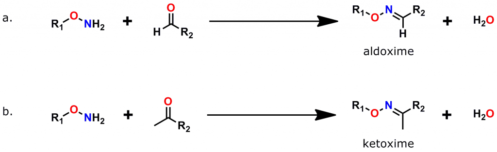 Figure 4: Formation of Oxime Bonds. a. The reaction of an oxyamine (also called alkoxyamine or aminooxy) group with an aldehyde forms an aldoxime. b. The reaction of an oxyamine with a ketone forms a ketoxime.