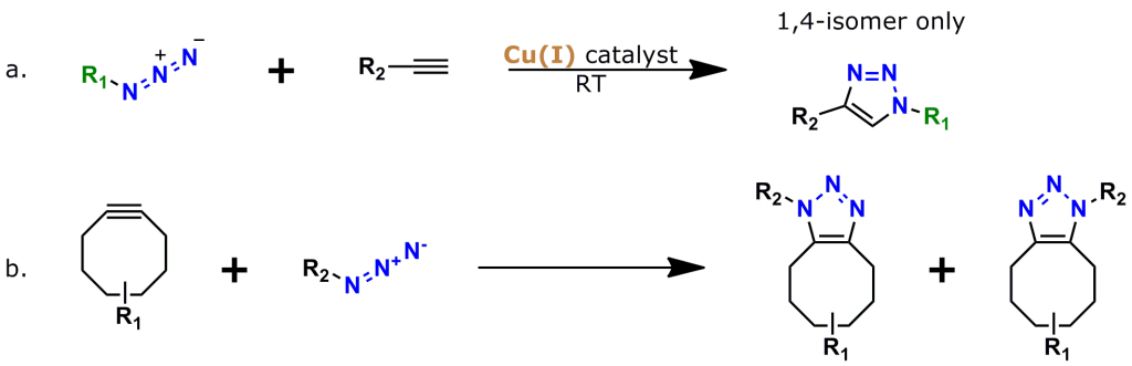 "Figure 2: The two most popular types of click chemistry. a. Copper-catalyzed azide-alkyne cycloaddition (CuAAC), the ""classic"" click chemistry reaction that was discovered in 2002. b. Strain-promoted azide-alkyne cycloaddition (SPAAC, also known as ""copper-free click chemistry""), discovered in 2005-2006 by Carolyn Bertozzi and colleagues."
