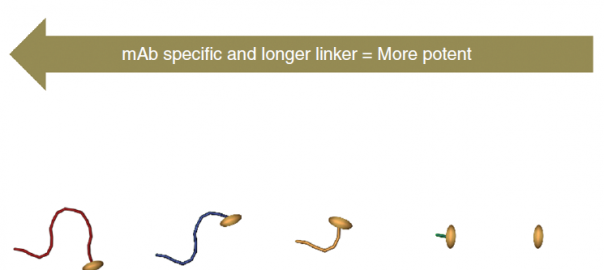 Graph showing the relationship of dPEG® linker length in relation to potency and specificity in extracellular drug conjugates.