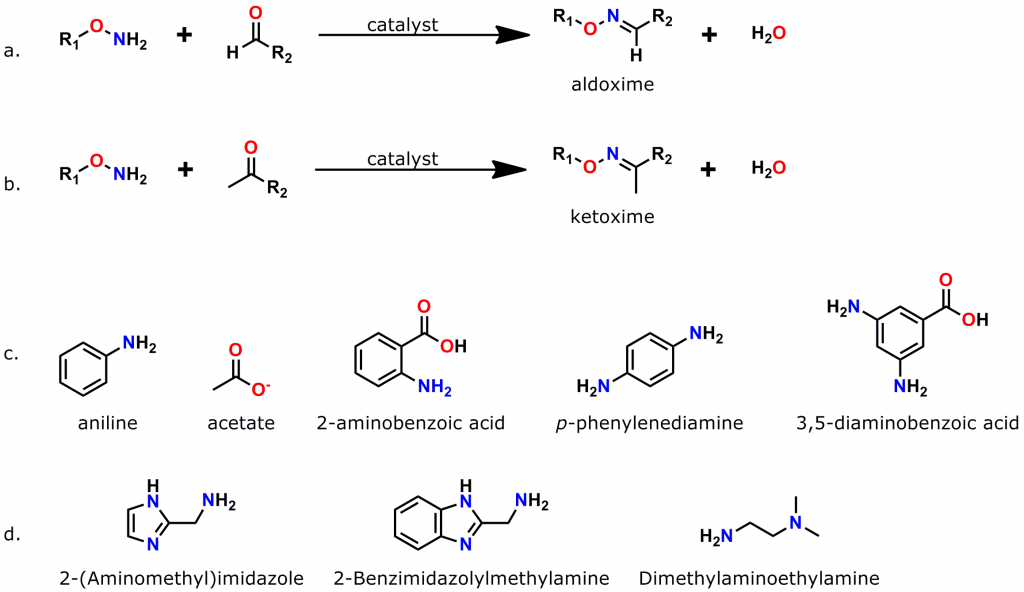 Figure 3: Oxime bond formation is a rapid, specific, bioorthogonal reaction that can be greatly accelerated by the use of suitable catalysts. a. Scheme for the formation of aldoximes, when an aminooxy compound reacts with an aldehyde. b. Scheme for the formation of a ketoxime (ketone plus aminooxy group). c. Common catalysts used to accelerate oxime bond formation. d. Recently discovered low-toxicity catalysts for oxime bond formation.