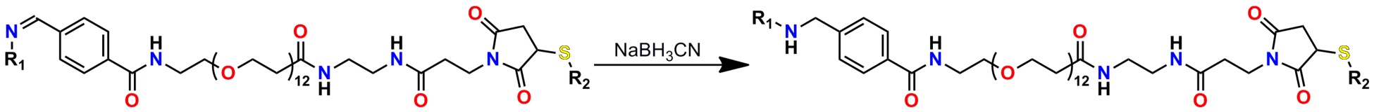 Figure 9 shows the reduction of an imine (Schiff base) to a secondary amine with sodium cyanoborohydride. The imine is from Figure 8. The maleimide is shown as having been reacted with a thiol; however, as noted in the text, this may not be required before reduction, if the reduction conditions are suitably mild.