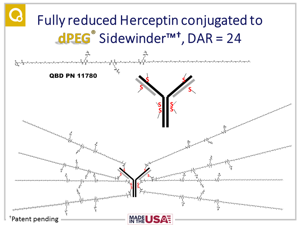 Schematic drawing of Herceptin® (trastuzumab) with 8 Sidewinder™ platforms, each with 3 loading points, giving a DAR of 24 for the ADC.
