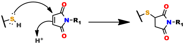 Figure 3: Simplified general mechanism of the thiol-maleimide reaction, which is a specific type of Michael addition reaction.