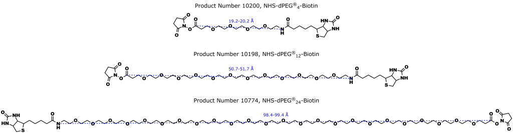 Figure 3: Quanta BioDesign's NHS-dPEG®n-Biotin line of biotinylation products. The products are functionalized with biotin through an amide bond on one end of a discrete PEG (dPEG®) spacer consisting of 4, 12, or 24 ethylene oxide units, and with N-hydroxysuccinimide (NHS) on the opposite end. The NHS is joined as an ester to a propanoic acid group.