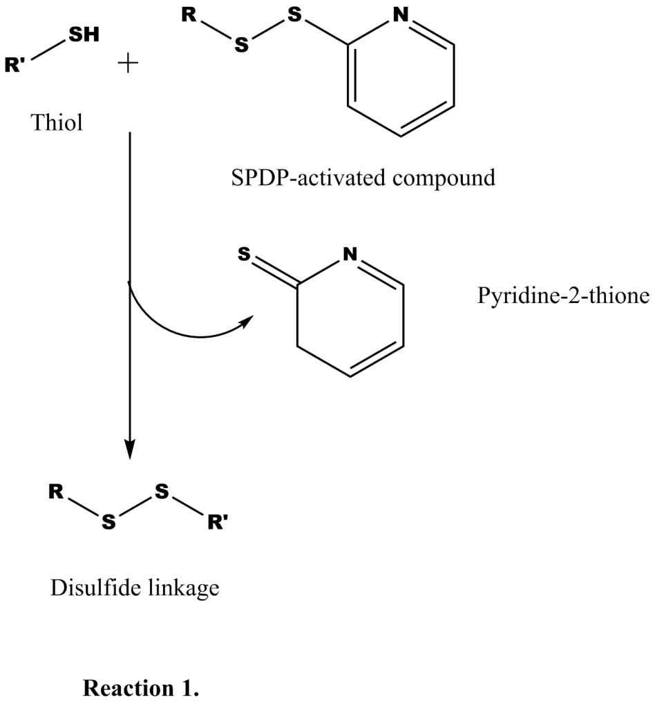 The thiol reactive pyridyl disulfide (SPDP) group is used in bioconjugation.