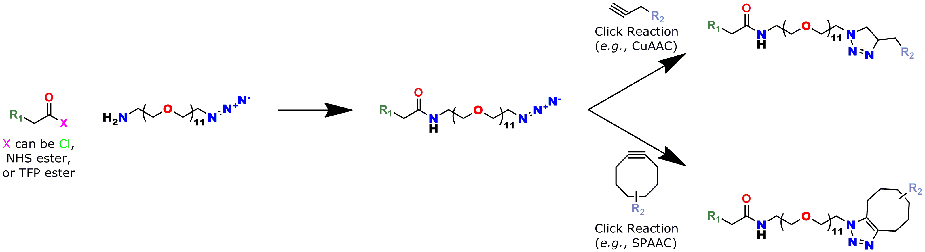 This reaction scheme shows how to use Quanta BioDesign's product number 10524, Azido-dPEG®11-amine, as a click chemistry crosslinking reagent. In the scheme, the amine end of molecule is reacted with a carboxylate group forming an amide bond with R1. Subsequently, the azide end of the molecule reacts by click chemistry (either copper(I)-catalyzed or strain-promoted azide-alkyne cycloaddition) to crosslink R1 with R2.
