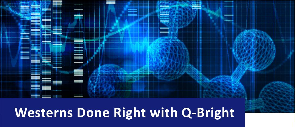 Blue image of western blots and scientific structure with text that reads Westerns Done Right with Q-Bright